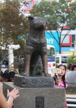 Treuer Hund Hachiko