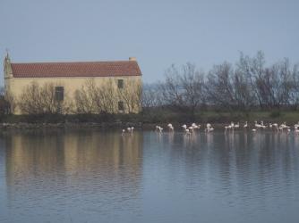 Albarella Flamingos