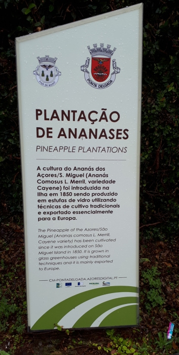 Ananasplantage Augusto Arruda