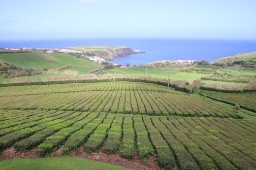 Teefelder Porto Formoso
