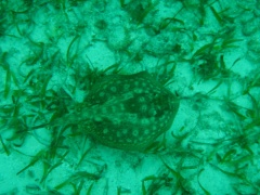 Florida Keys John Pennekamp Coral Reef Rochen