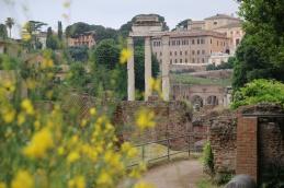 Rom Forum Romanum Castor und Pollux Tempel