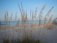 Florida Sanibel Island Strand