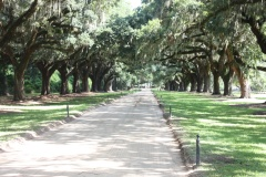 South Carolina Boone Hall Plantation Allee