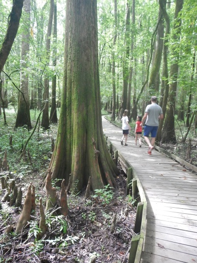 South Carolina Congaree NP Bohlenweg mit Sumpfzypressen