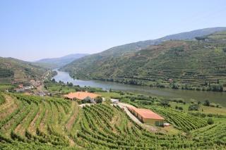 Portugal Alto Douro Wein