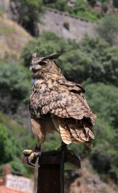 Portugal Douro-Fahrt Greifvogelschau