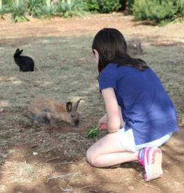 Kroatien Lokrum Kaninchen