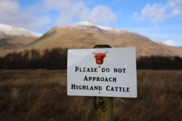 Highlands - am Kilchurn Castle Lochawe