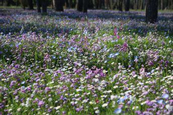 Blumenwiese Albarella
