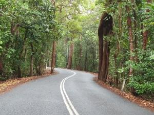 Cape Tribulation Road