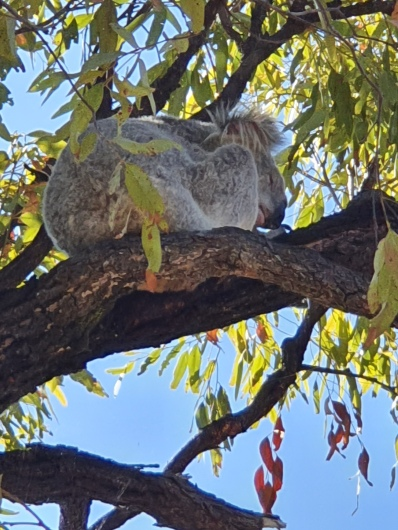 Magnetic Island Wanderung zum Fort Koala
