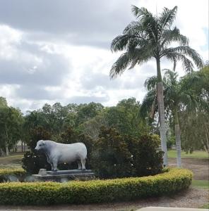 Rockhampton Beef