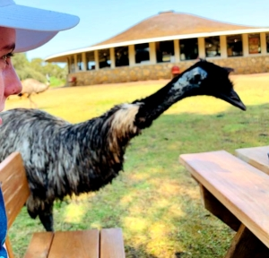 Tower Hill Reserve Emu