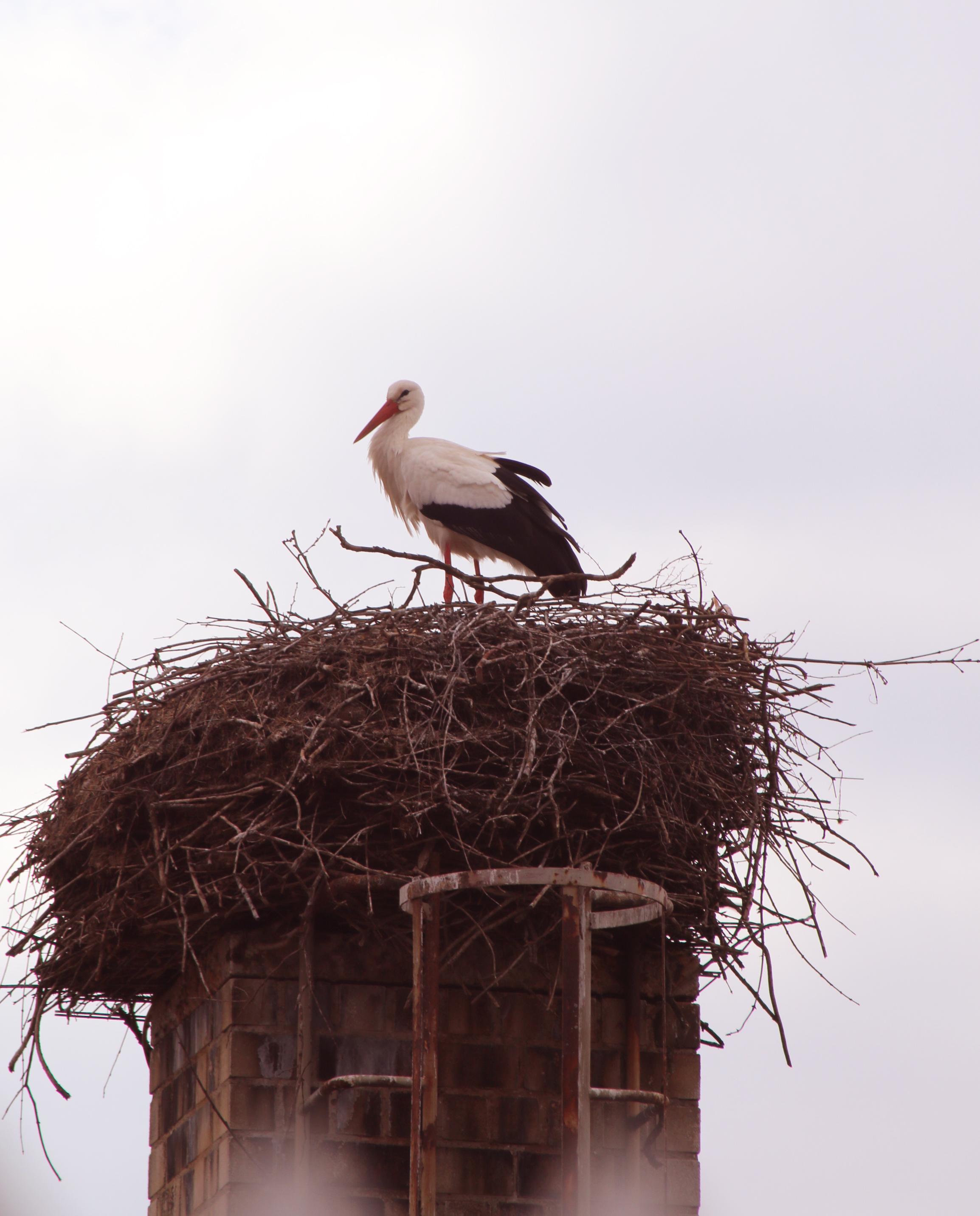 Bingenheimer Ried Storch