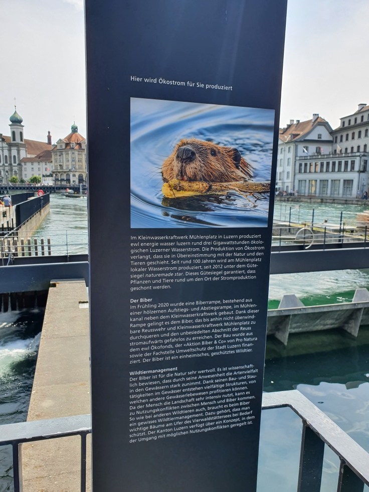 Luzern Biberrampe an der Speurerbrücke