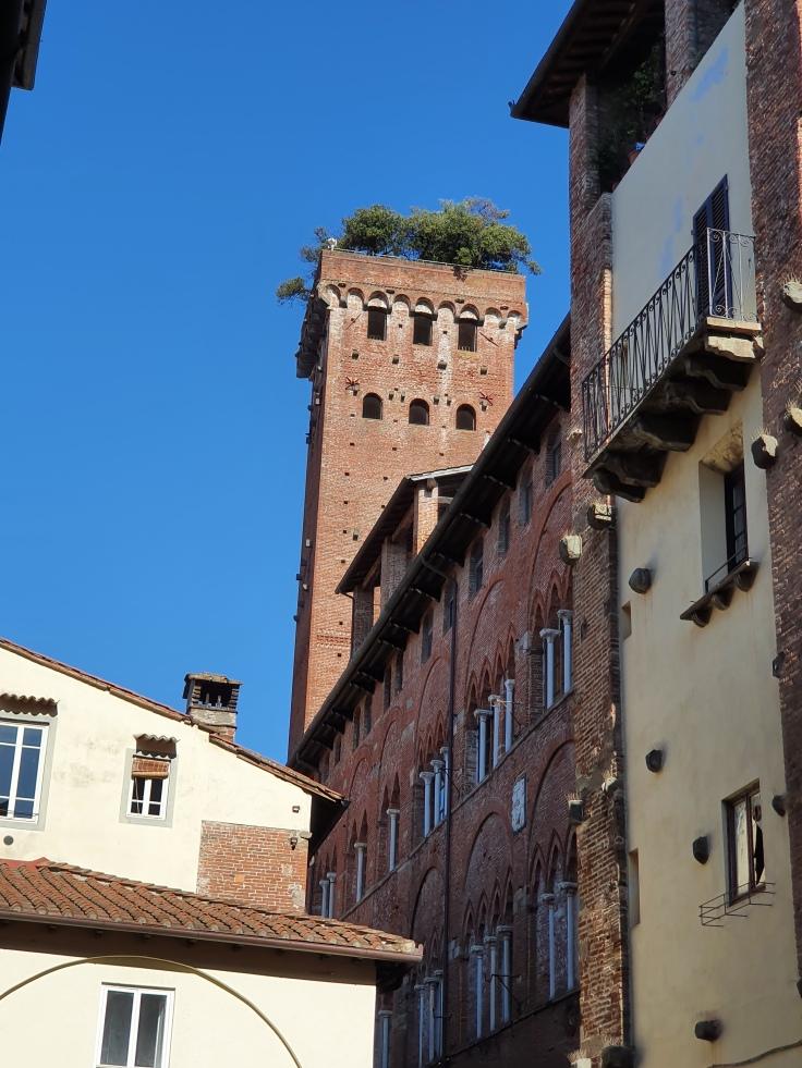 Lucca - Geschlechterturm Guinigiturm mit Steineichen